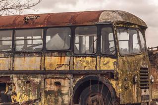 _DSC0040 - Magic Bus