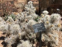 IMG_9438 (f l a m i n g o) Tags: nm newmexico santafe botanic gardens desert high april 2018