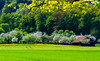 Spring on the farm (Brian Out and About) Tags: nikon d5200 ©brianblair2018 europe countryside farms landscapes lee polarizer explore nature amateur
