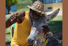 Show Some Love,Mon! (Poocher7) Tags: donkey people portrait male man love affection animal tied jamaicanflag jamaica westindies caribbean mobay montegobay hug yellowtanktop chains beard hat palmleafhat adorable cute sweetmoment