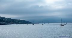 hazy horizons (Rourkeor) Tags: gourock scotland unitedkingdom gb yachts sea boats water reflections mist moorings houses clouds ferry horizon olympus omd em1mk2 12100mmpro mft