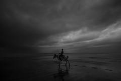 In to the Sea !!! (zayembin.tajdid) Tags: kuakata bangladesh bangladeshi people bnw 2018 1020mm sigma canon rider horse cloud shadow seashore seaside sea season