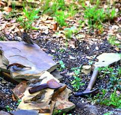 Garden Project (austexican718) Tags: garden animal texas critter centraltexas hillcountry backyard