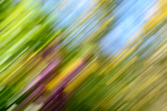 Leaning lilac (DebbieFirkins) Tags: icm blurry blur movement flowers abstract blurring