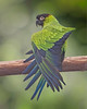 A green and blue parrot (Roland B43) Tags: parrot