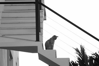 Lines and Feline