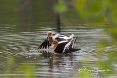 (bryce yamashita) Tags: belmar belmarpark colorado d500 lakewood nature nikon wildlife yamashita