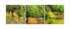 The countryside of Ibiza - El campo de Ibiza - La campagna di Ibiza -La campagne d'Ibiza (COLINA PACO) Tags: ibiza islasbaleares españa espagne spain spagna countryside campo campagna campagne franciscocolina fotomanipulación fotomontaje illesbalears eivissa