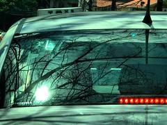 (rfellipe) Tags: reflexo mirror espelho janela taxi trânsito traffic engarrafamento tree galhos sombras reflex