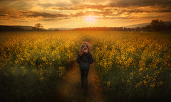 Dreaming (Chrisnaton) Tags: spring canolafield eveningmood eveninglight eveningsky sunset sunsetsky girl path walking journey intothefield dreaming surreal landscape nature walkinginnature