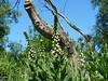 Fingerhut im Moorgebiet (achatphoenix) Tags: moor emsland papenburg moorgebiet