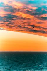 Sunset (stefller.1968) Tags: meer wolken vögel sea cloud bird ostsee himmel abend stimmung