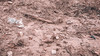 Rio Paraíba (multivisualnet) Tags: paraíba brasil br monteiro rio meioambiente planta agua arvore passagem estrada river water pisf transposicao transposição ponte céu sky poluição degradação assoreamento mata ciliar lama barragem lago açude caatinga vegetação bioma cariri são francisco sãofrancisco bacia hidrografica cerca madeira arame bombeamento sãojose gado vaca boi pasto verde green rocha pedra raiz barro peixe animal flora fauna sangria parede ufpb prac coex