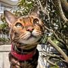 Sticks? I MUST investigate! . . . #bengal #cat #bengalcat #bengals #cats #kitty #kittycat #bengalcats #bengalcatsoninstagram #bengalcatsofinstagram #catsofinstagram #crazycat #marbledbengal #sillykitty #catstagram #kittygram #ネコ #ねこ #猫 #neko (tiina2eyes) Tags: sticks i must investigate bengal cat bengalcat bengals cats kitty kittycat bengalcats bengalcatsoninstagram bengalcatsofinstagram catsofinstagram crazycat marbledbengal sillykitty catstagram kittygram ネコ ねこ 猫 neko ifttt instagram