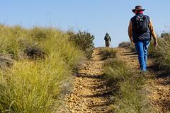 CAMINANTES (bacasr) Tags: track camino caminando nature walking comunidaddemadrid senderismo sendero cuesta caminantes slope hiking trail naturaleza path españa spain argandadelrey walkers