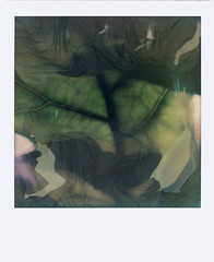untitled (kaumpphoto) Tags: polaroid 680 instant green leaf veins decay process abstract
