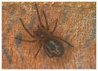 Spider EF7A2757