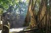 Magical light in Monkey Forest (Monika Kalczuga (on&off)) Tags: monkeyforest monkeysanctuary forest ubud indonesia asia nature trees light shadows temple hindutemple bali