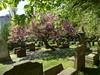 Irvine Old Parish Churchyard (268) (dddoc1965) Tags: dddoc davidcameronpaisleyphotographer irvine ayrshire scotland thespiritofscotlandremembranceproject may16th2018 cemetery graveyard irvineoldparishchurchyard sunny warm blueskies lumix photos