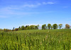 Over the field.... (Kerryjwagner) Tags: pasture field outdoors green sky view