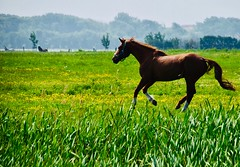 Spring in the air (rienschrier) Tags: inspiredbylove inspiredwithlove natuur nature horse paard