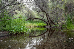 Branch Reflections (Naturali Images) Tags: reflections reflection branches pond nature hike