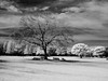 (t*tomorrow) Tags: ricoh gx100 infrared monochrome 赤外線 白黒 モノクロ 万博記念公園