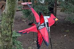 Spinning Cardinal (hank278) Tags: spinning cardinal red trees yard canoncamera canon photoaday pad
