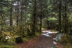 Rain Forest (Katy on the Tundra) Tags: rainforest juneau mendenhallglacier