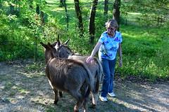 Dragon Fly Farm Donkeys 20180502 20180501  DRagon Fly Farm Donkeys Deborah 20180502 copy Deborah (Shane's Flying Disc Show) Tags: donkeys catdragonflyfarm