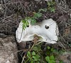 Spain, Sant Antoni, Cerca (balavenise) Tags: spain monstre od bone iseeface pareidolia