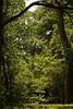 18-05_DSCF9498 On1 m (Jacek P.) Tags: ogród botaniczny drzewa liście wiosna trees garden forest leafs fujifilm xt20 on1photoraw2018