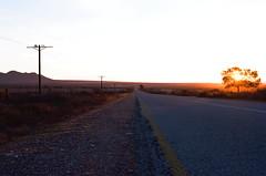Sunset Road (Semjaja) Tags: road sunset landscape tree telephonepoles nikon nikonf90x 28105mm nikkor nikkorafd28105mm kodak kodakektar100 ektar100 ektar film 35mm 35mmfilm 35mmcamera filmlives filmsnotdead filmphotography filmcamera slr ishootfilm shootfilm sandveld southafrica