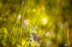Flora (Abulafia82) Tags: pentax pentaxk5 k5 ricoh ricohimaging colore colors color colori acolori natura nature fiore fiori flower flowers piante plants pianta plant flora