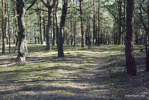 Волинський ліс InterNetri Ukraine 1848827416