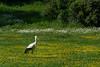 _DSC2260-bearbeitet.jpg (Burghart-Alexander) Tags: orte deutschland pflanze poing wildpark umwelt bäumeundsträucher tiere europe bundesland bayern
