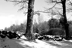 Winter Scene (RockN) Tags: snow february2018 moorestatepark paxton massachusetts newengland