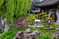 5DM4-9888.jpg (Larry Marotta) Tags: huntingtonlibrary huntingtongardenslibrary rain attheh chinesegarden sanmarino california unitedstates us