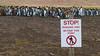 Penguins Only (BKB Images) Tags: birds falklands penguin king colony volunteerpoint ornithology ornithological south atlantic wildlife wildfowl exotic