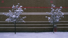 Suburban snow scene 99 (stevensiegel260) Tags: snow winter tree snowstorm blizzard snowcovered newjersey