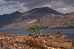 A Tree On Loch Maree (.Brian Kerr Photography.) Tags: scotland scottishlandscapes scottish scotspirit scottishhighlands scottishlandscape scotspines visitscotland torridon lochmaree tree nature naturallandscape natural outdoor outdoorphotography opoty onlandscape briankerrphotography briankerrphoto landscape clouds sky