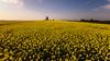 en contre plongée (flo73400) Tags: moulin colza jaune yellow landscape mill paysage