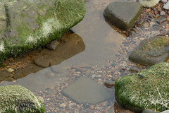 St Mary's Island (Shaun Kane Design) Tags: rocks rock rockpool rockpools water stmarysisland whitleybay northtyneside