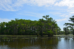 Uncertain - Lakeside (Drriss & Marrionn) Tags: uncertain uncertaintx texas usa outdoor landscape landscapes caddolake lake water tree trees cypresstree reflection green spring moss tillandsiausneoides spanishmoss forest