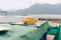 Another Cat. (t-a-i) Tags: 28mm a7rii a7rmkii a7r2 cat hk hkg hongkong ilce7rm2 sony sonya7rii sonyilce7rm2 sonyα7rii taio α7rii newterritories