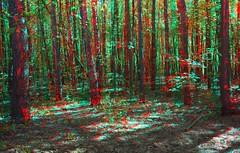 Spring !3D Anaglyph ! (3D VIDEO) Tags: winter3d 3dvideo 3dphoto 3d 3dsbs best3dvideo tv3d 3dfortv 3dmovie 3dglasses 3dpopouteffects sidebyside 3dfilm popout amazing beautiful virtual 1080p box anaglyph glassesanaglyph positive crazy magnificent spring winter nature traveling journey fantastic 2018 hd
