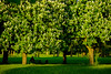 Decksteiner Weiher (anabeesphotos) Tags: decksteiner weiher köln cologne kölle nature natur natural trees