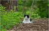 Miss Pretty (Sun~Lover) Tags: beautiful cat woods fullersbughwoods illinois spring 2018 migration feline explore