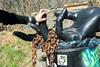 Hand in hand (KPPG) Tags: 7dwf crazytuesdaytheme touch berlin teufelsberg hände hands finger kette