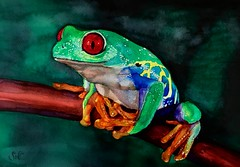 Rana - ink and watercolor on paper (Susana Nahmias) Tags: watercolor artonpaper realism art ink frog nahmias fineart susananahmias animal green nature arte acuarela leaf